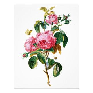 Rosas de la col extraídos de la naturaleza membrete