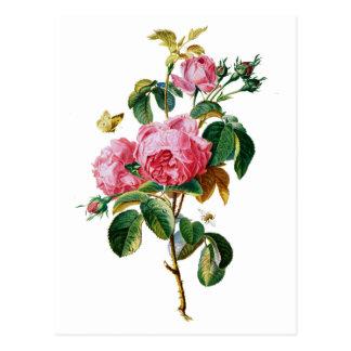 Rosas de la col extraídos de la naturaleza tarjetas postales
