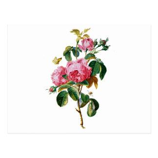 Rosas de la col extraídos de la naturaleza postales