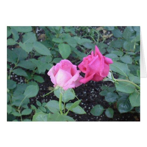 Rosas de los amantes tarjeta de felicitación