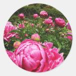 Rosas de los rosas de los rosas pegatina redonda