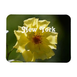 Rosas de Nueva York Imanes