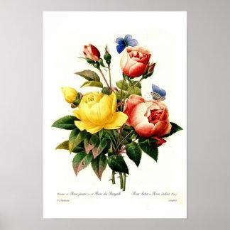 Rosas de Pedro-José Redouté Posters