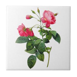 Rosas de Redoute Azulejo Cuadrado Pequeño