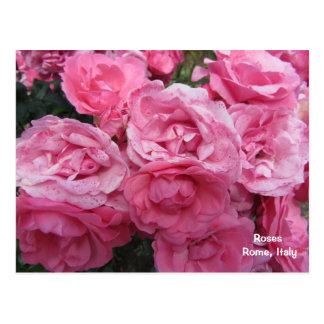Rosas de Roma Italia