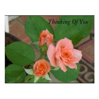 Rosas de Tyler Tarjetas Postales