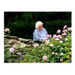 Rosas del corte de la abuela postales