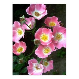 Rosas del jardín secreto postal