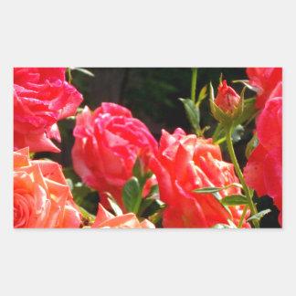 Rosas del melocotón pegatina rectangular