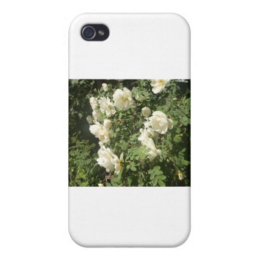 Rosas del pleno verano iPhone 4/4S fundas