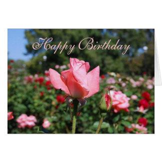 Rosas del rosa del feliz cumpleaños en jardín tarjeta de felicitación