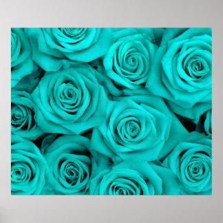 Rosas del Spectacular de la turquesa Póster