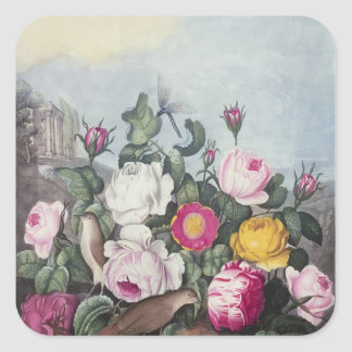 Rosas, 'del templo de Flora Pegatina Cuadrada