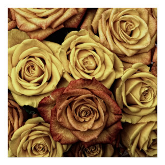 Rosas del vintage poster