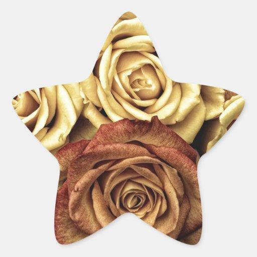 Rosas del vintage para su color de rosa pegatina en forma de estrella