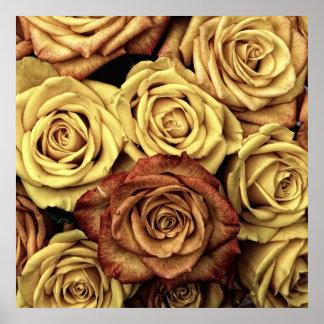 Rosas del vintage póster