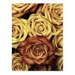 Rosas del vintage tarjetas postales