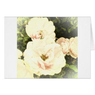 Rosas descolorados tarjeta de felicitación