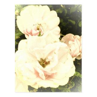Rosas descolorados tarjeta postal