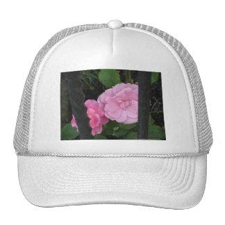 Rosas detrás de barras gorras