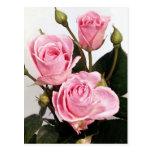 Rosas elegantes del rosa color de rosa tarjeta postal