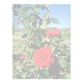 Rosas en el lagar de Botobolar, flores de Australi Plantillas De Membrete