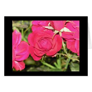 Rosas en la floración tarjeta pequeña