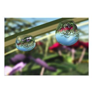 Rosas en la impresión de la foto de las gotas de cojinete