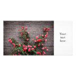 Rosas en la pared de ladrillo tarjeta fotografica personalizada