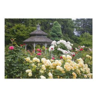 Rosas en rosaleda de la floración y del Gazebo en Cojinete