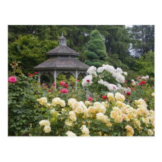Rosas en rosaleda de la floración y del Gazebo en Postal