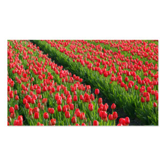 Rosas en tierras de labrantío