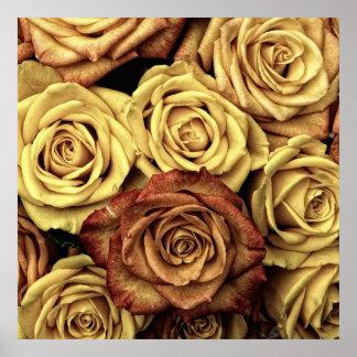 Rosas en tono de la sepia