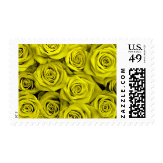 Rosas espectaculares amarillos franqueo