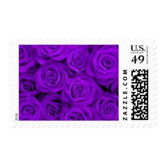 Rosas espectaculares púrpuras sellos