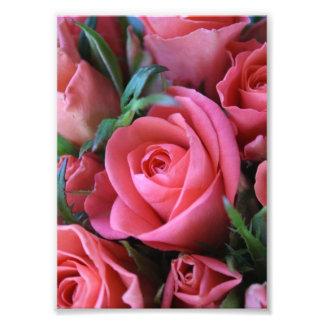 Rosas Fotografias