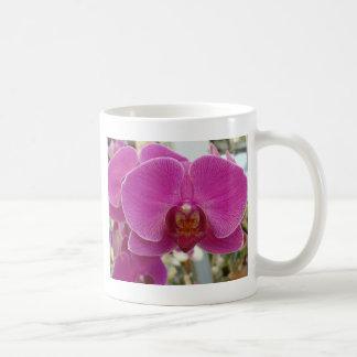 Rosas fuertes de las orquídeas taza