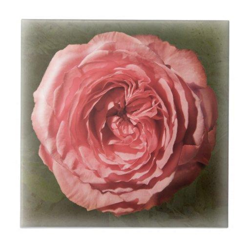 Rosas fuertes subiós azulejo