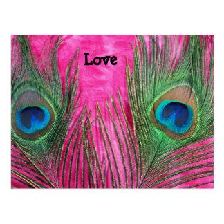 Rosas fuertes y plumas del pavo real tarjeta postal