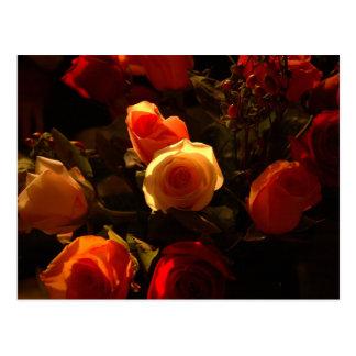Rosas I - Naranja rojo y gloria del oro Tarjetas Postales