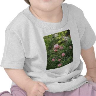 Rosas miniatura rosados 1 camiseta