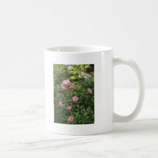 Rosas miniatura rosados 1 taza de café