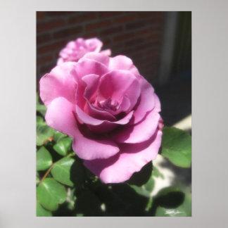 Rosas Moradas 1 Poster