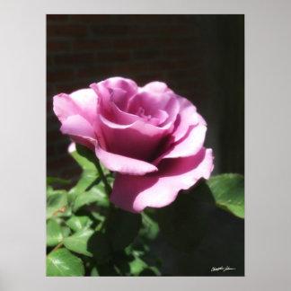 Rosas Moradas 2 Poster