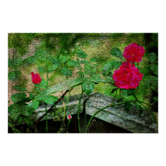Rosas Poster