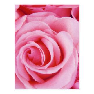 Rosas para usted postal
