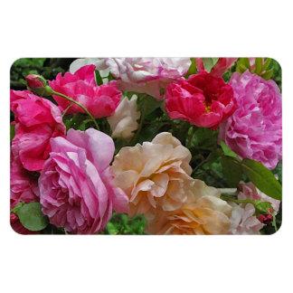 Rosas pasados de moda imanes rectangulares