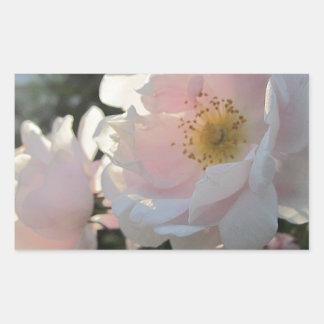Rosas pasados de moda rectangular pegatinas