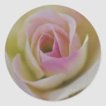 rosas pegatinas redondas