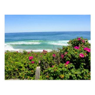 Rosas por el mar tarjetas postales